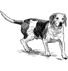 Sketch a hunting dog vector