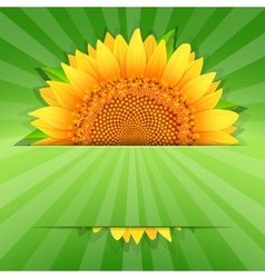 Summer sunflower poster template vector image vector image