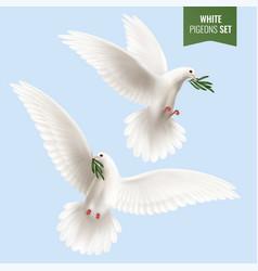 White dove realistic set vector