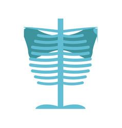 bone chest anatomy body medical vector image