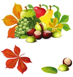 Autumn fruit and leaves vector