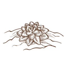Lotus plant in ground isolated oriental flower vector