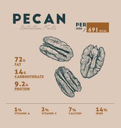 Nutririon fact of pecan sketch hand drawing vector