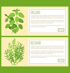 Oregano and rosemary bunches on big banners set vector