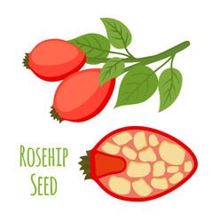 Rosehip seeds haw cartoon flat style vector