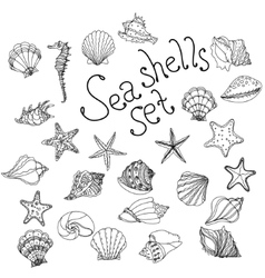 Sea shell seashell starfish nautilus sea fauna vector image