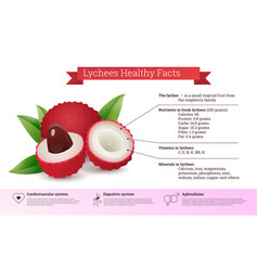 Lychees healthy facts nutritional information vector