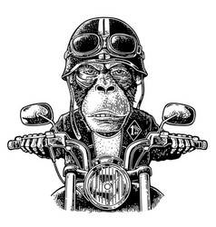 Monkey driving a motorcycle rides vintage vector