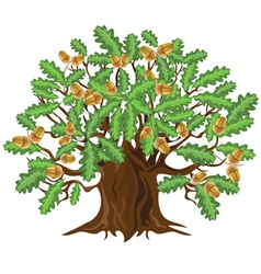 Big green oak tree with acorns vector image