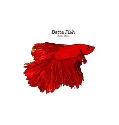 betta fish hand draw sketch vector image
