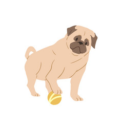 Cute pug with wrinkled face playing with ball vector