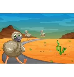 Emu in desert vector
