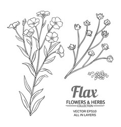 Flax set vector