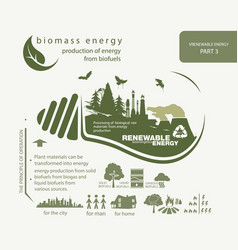 Infographics renewable source of biomass energy vector