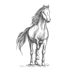 Sketched portrait of horse vector
