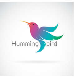 hummingbird design on a white background vector image vector image