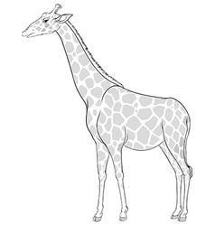 A sketch of a giraffe vector