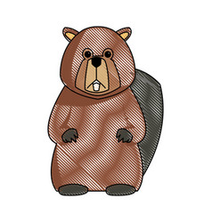 Cartoon beaver teeth animal of forest vector