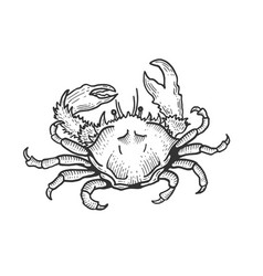 crab sea animal sketch engraving vector image