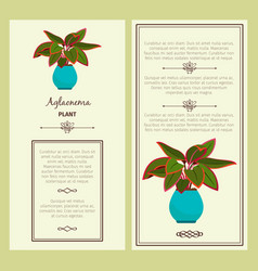 greeting card with aglaonema plant vector image