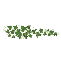 Ivy branch icon greenery decoration and plant vector