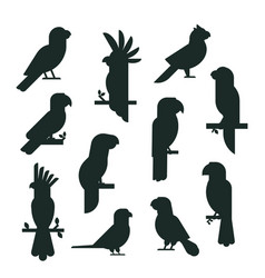 Parrots birds black silhouette animal nature vector