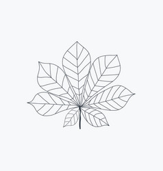 chestnut leaf icon isolated on white vector image