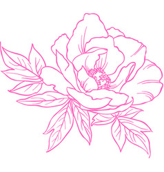 contour image peony on a transparent vector image