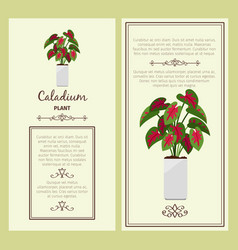 greeting card with caladium plant vector image