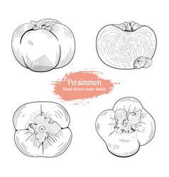 persimmon hand drawn sketch set food vector image