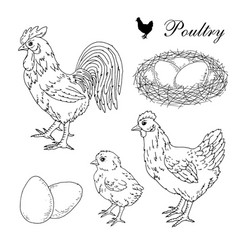 poultry farm rooster hen chick eggs and nest hand vector image