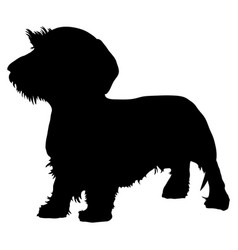 wirehaired dachshund purebred dog vector image