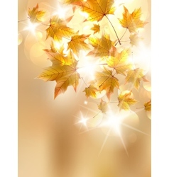 Autumn leaves very shallow focus vector