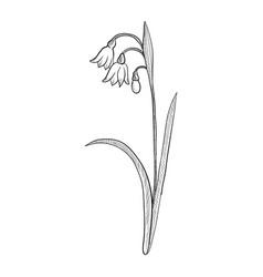 Drawing summer snowflake vector