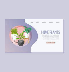 home plants in scandinavian web vector image