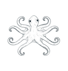 octopus with symmetric tentacles outline hand vector image