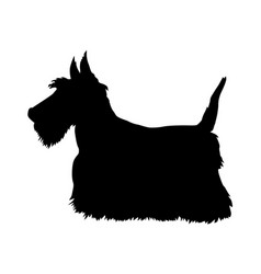 scottish terrier vector image vector image
