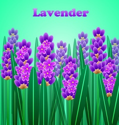 The lavender elegant card with frame of flowers vector image