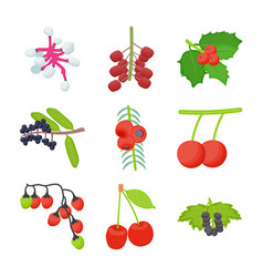 Berries bunches flat icons vector