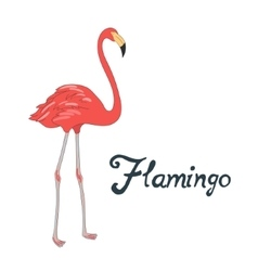 Bird flamingo vector