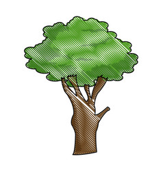 cartoon tree plant natural botanical ecology vector image