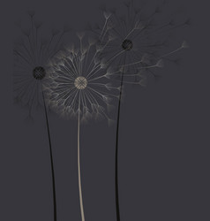 dark background with dandelion flower vector image