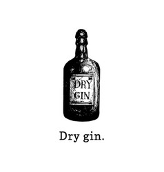 dry gin bottle hand drawn vector image