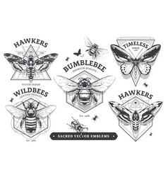 emblems with bugs vector image