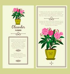 oleander flower in pot banners vector image