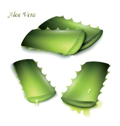 Set of cut pieces of aloe vera vector image
