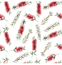 watercolor australian callistemon seamless pattern vector image