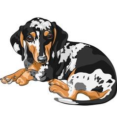 miniature Dachshund vector image