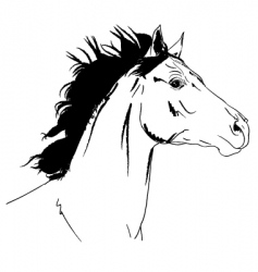 Arab horse head vector image