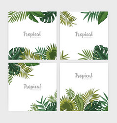 Collection of square backdrops with green tropical vector